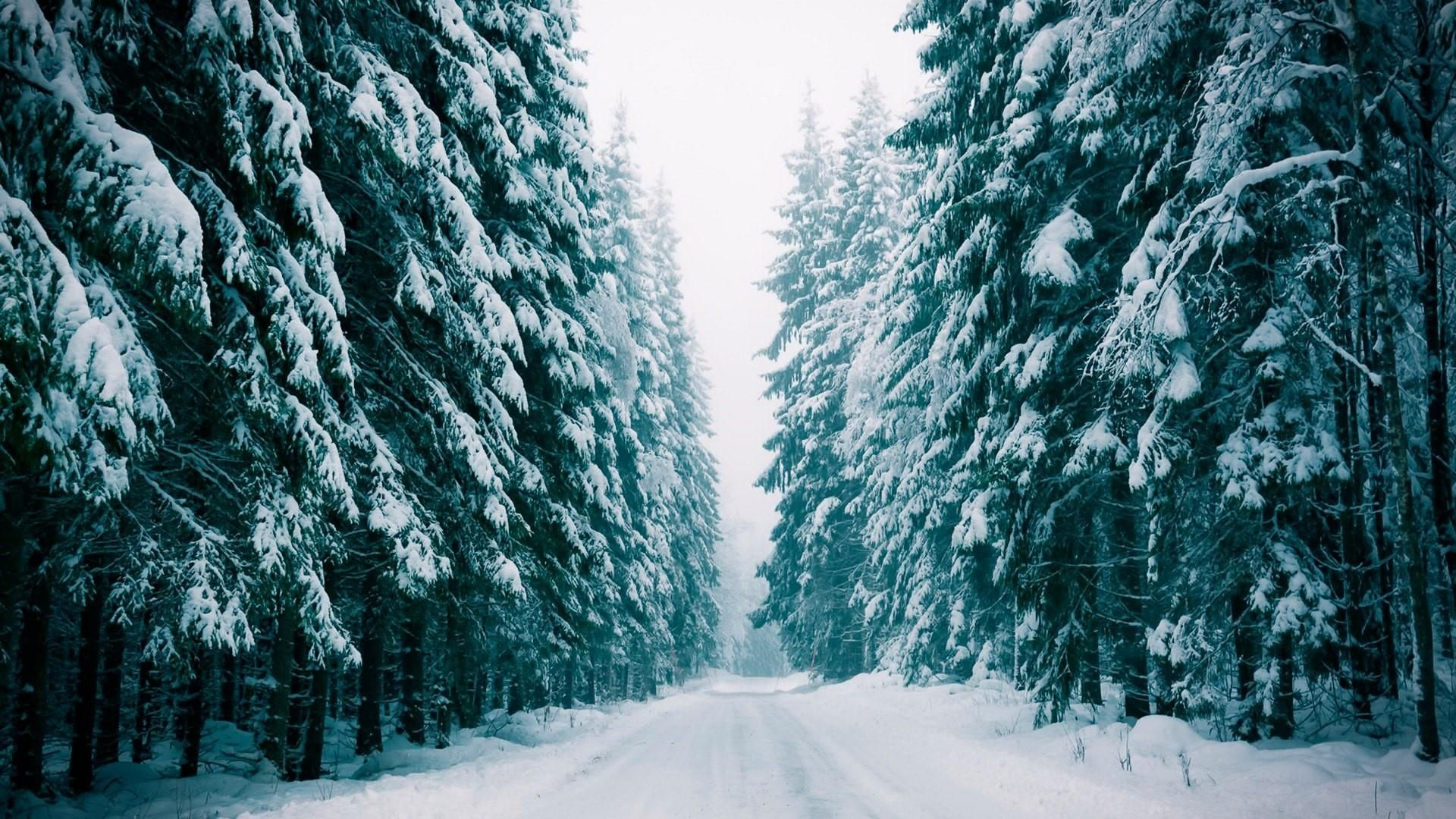 Snowy Forest Wallpaper 474687 In 2019 Snowy Forest