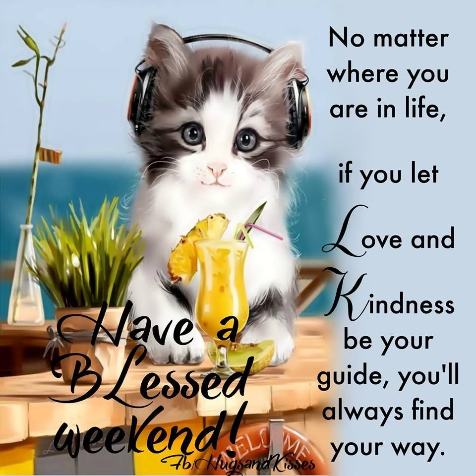 Image result for may your weekend be blessed cats