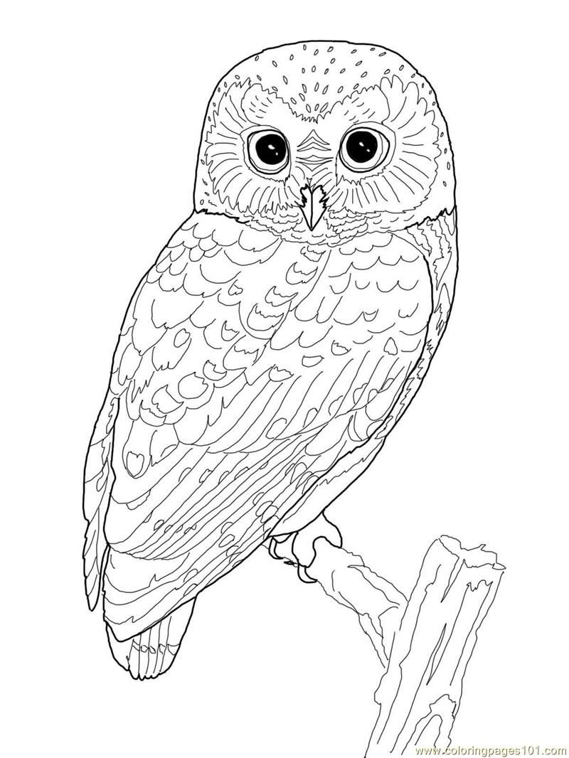 Printable Owl Coloring Page Coloring Pages Owl Birds > Owl