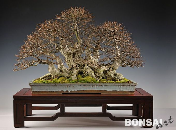 Bonsai Art Bonsai Bark Bonsai Art Bonsai Forest Bonsai Tree