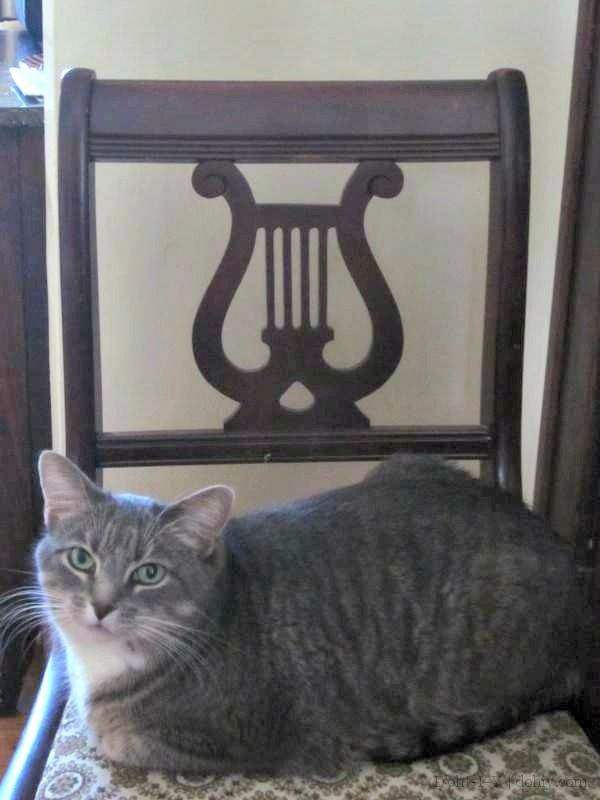 Learn about vintage Duncan Phyfe style furniture and how to find and buy  it. Starring my cat, who has to be in every picture! - Learn About Vintage Duncan Phyfe Style Furniture And How To Find And