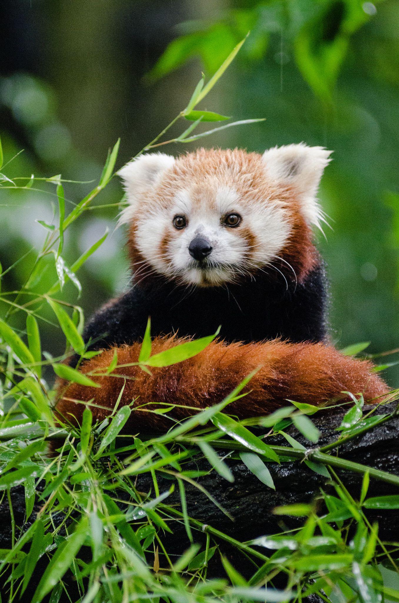 Is a cute Alisa Panda nudes (65 photos), Ass, Bikini, Feet, swimsuit 2019