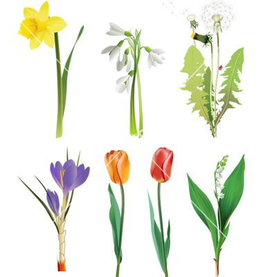 Set Of Spring Flowers Vector Hobbies Pinterest Vector Flowers