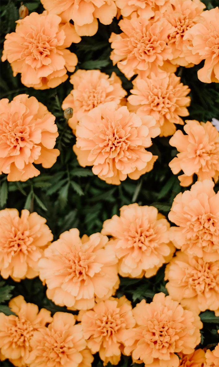 Orange peach summer flowers Floral wallpaper iphone