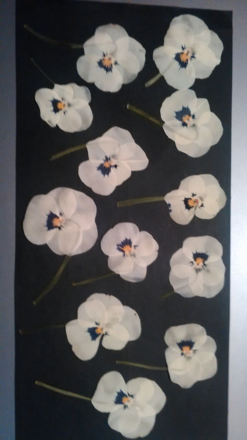 How to scrapbook pressed flowers - Real Pressed Flowers White Pansy Ready For Frame Scrapbooking Card Making