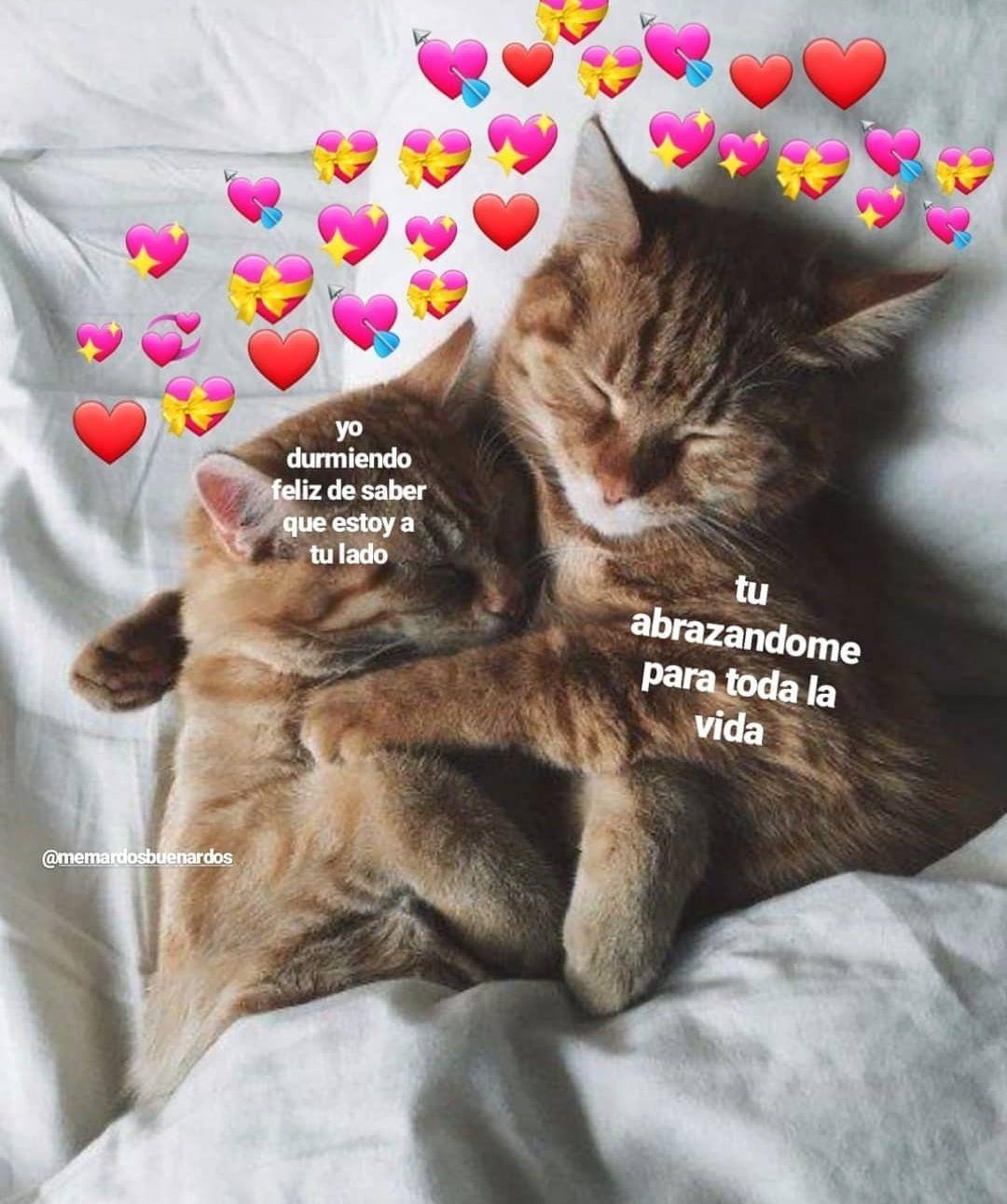 Memes Soft En 2020 Memes Lindos Memes Divertidos Meme Gato