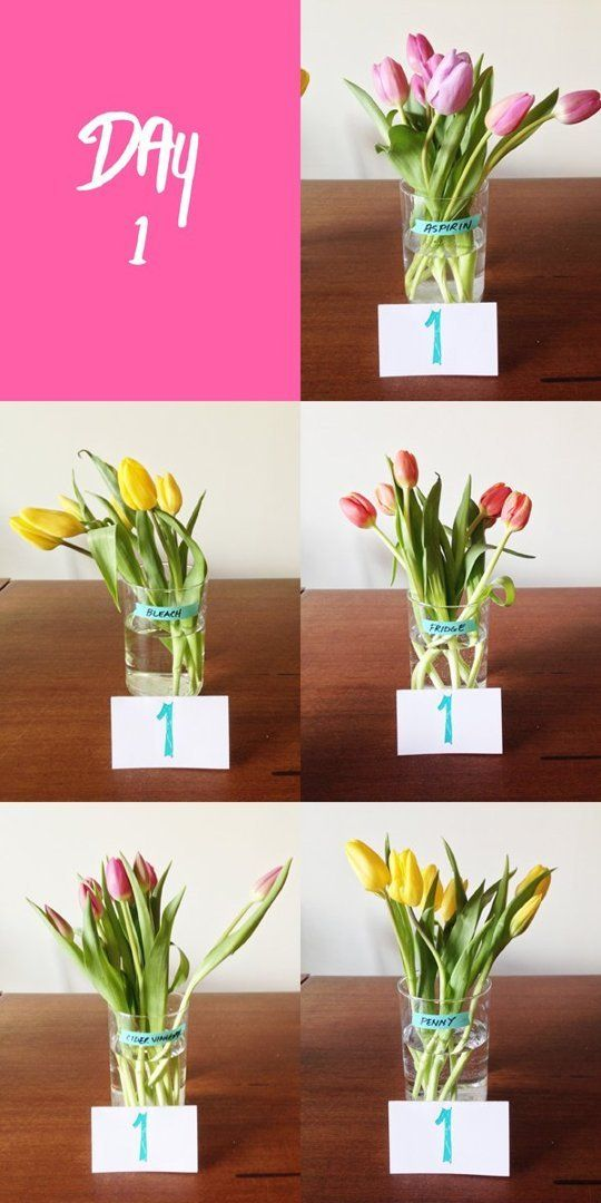 We Tried It: The Best Way to Keep Flowers Fresh | Pinterest | Copper ...