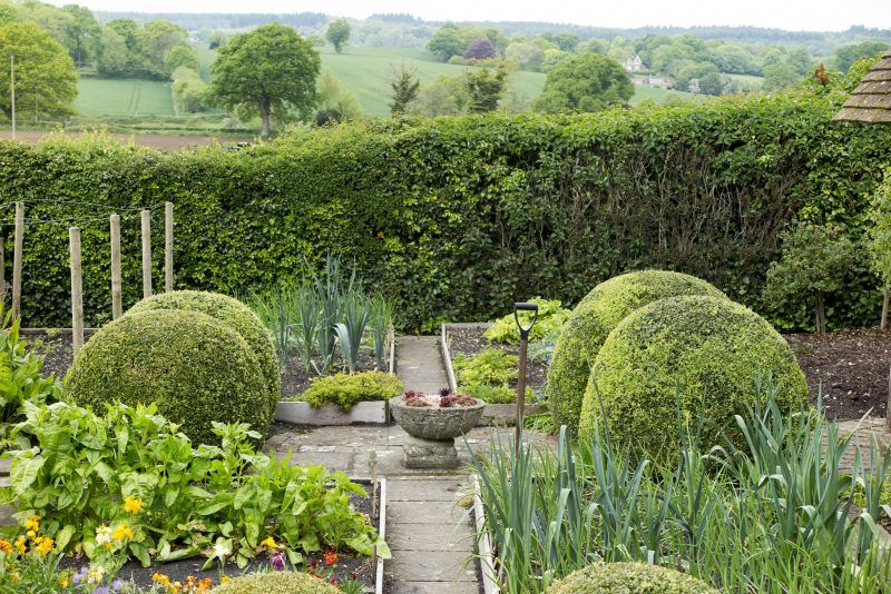 Which hedge is right for my garden | Front garden, Hedges ...