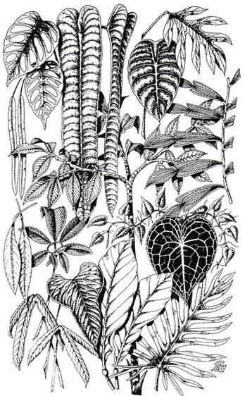 Aroid Foliage By David Leigh Plant Tattoo Leaf Art Philodendron Monstera