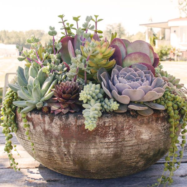 A Galaxy Full of Succulents For Your Home & Garden is part of Succulent garden Bowl - Succulents have taken over the world  Not content to only be in beautifully styled pinterest and instagram photos, they have infiltrated the galaxy