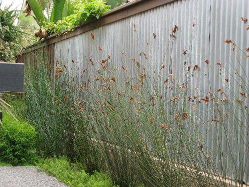 Galvanized wall = stylish privacy fence.