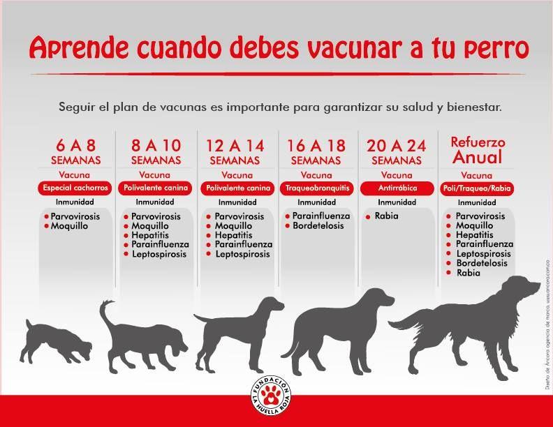 Vacunas Perros