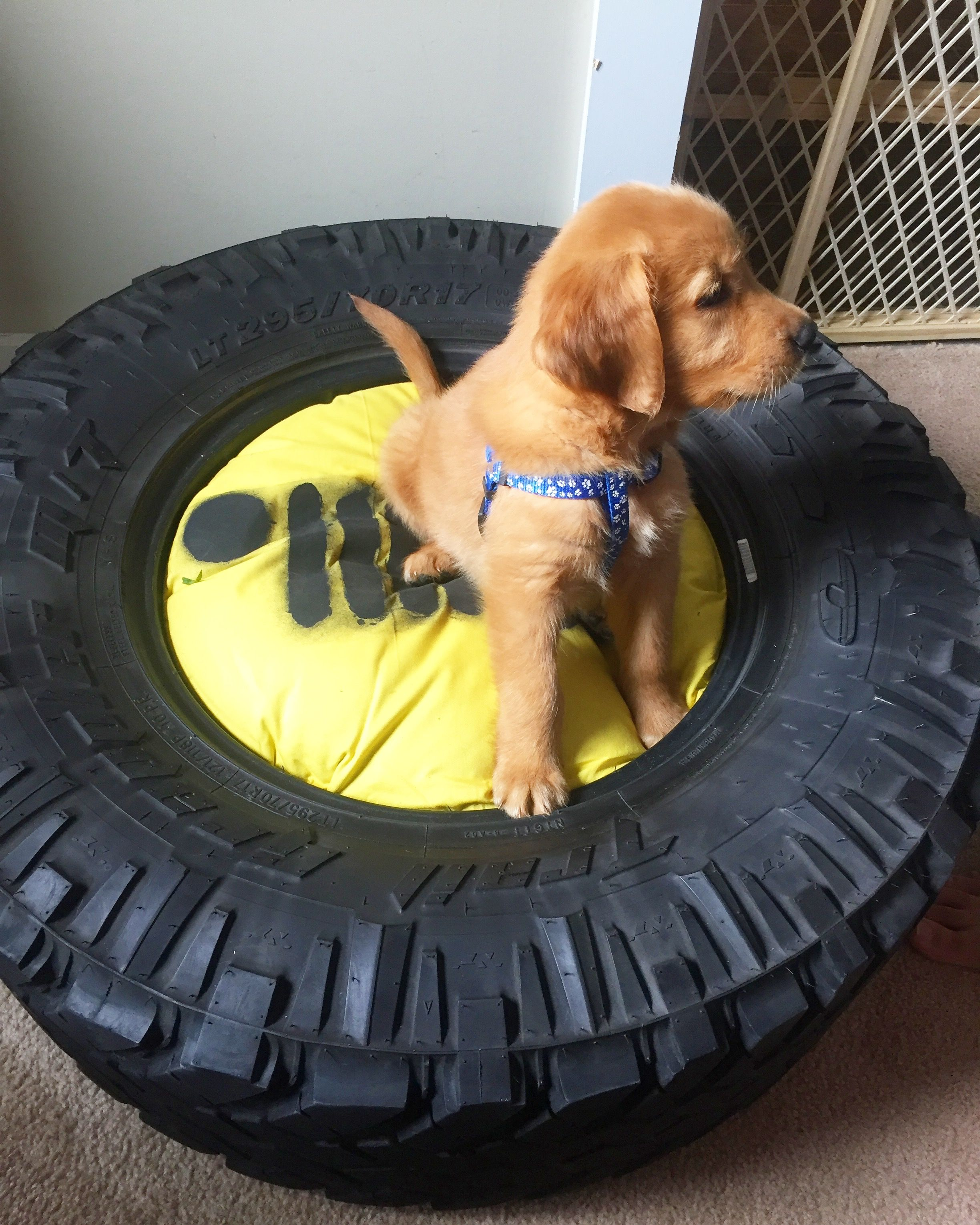 Jeep Tire Diy Dog Bed Diy Dog Bed Diy Dog Bed Dog Bed Dogs