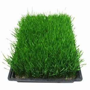 How To Get Rid Of Really Thin Grass Grass Seed Planting Grass