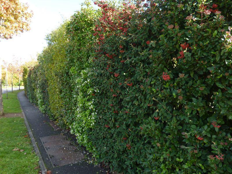 Bien choisir sa haie   Jardin   Jardins, Jardinage et ...