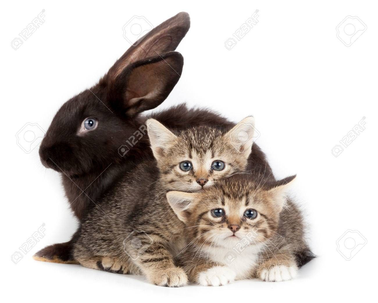 Friendship Animals And Pets Kitten And Rabbit In Studio Isolated On White Background Affiliate Pets Kitten Friends In 2020 Pet Kitten Animals Animals And Pets