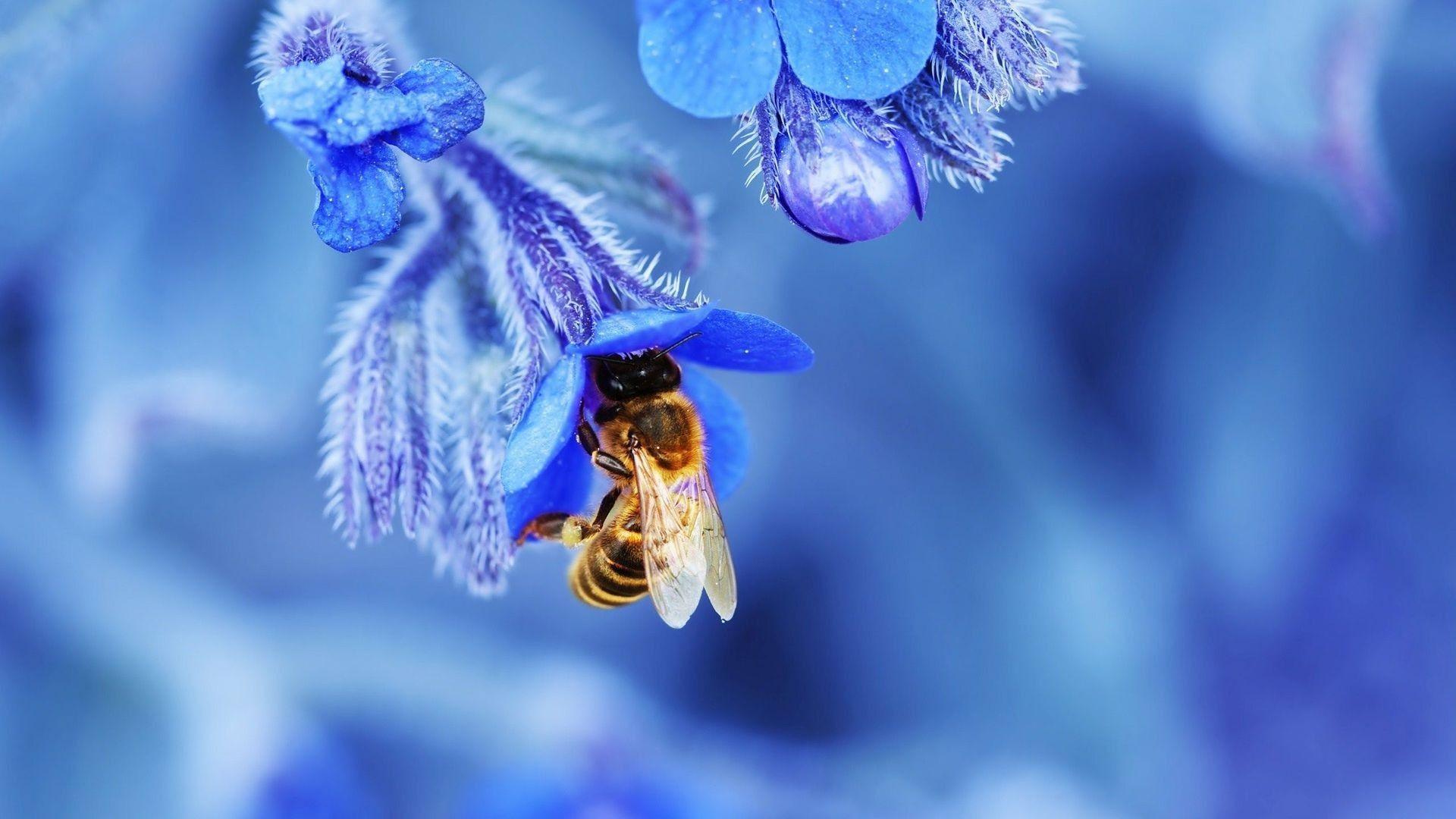 Free Images blossom flower purple pollen spring herb