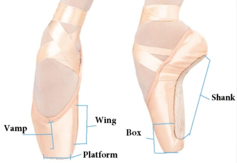 Pointe Shoes For Beginners The Daily Dolphin