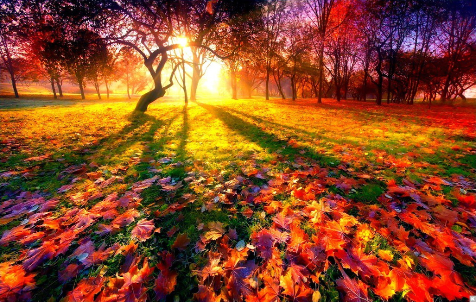 Screenshot Autumn and all its beauty jigsaw puzzle (24