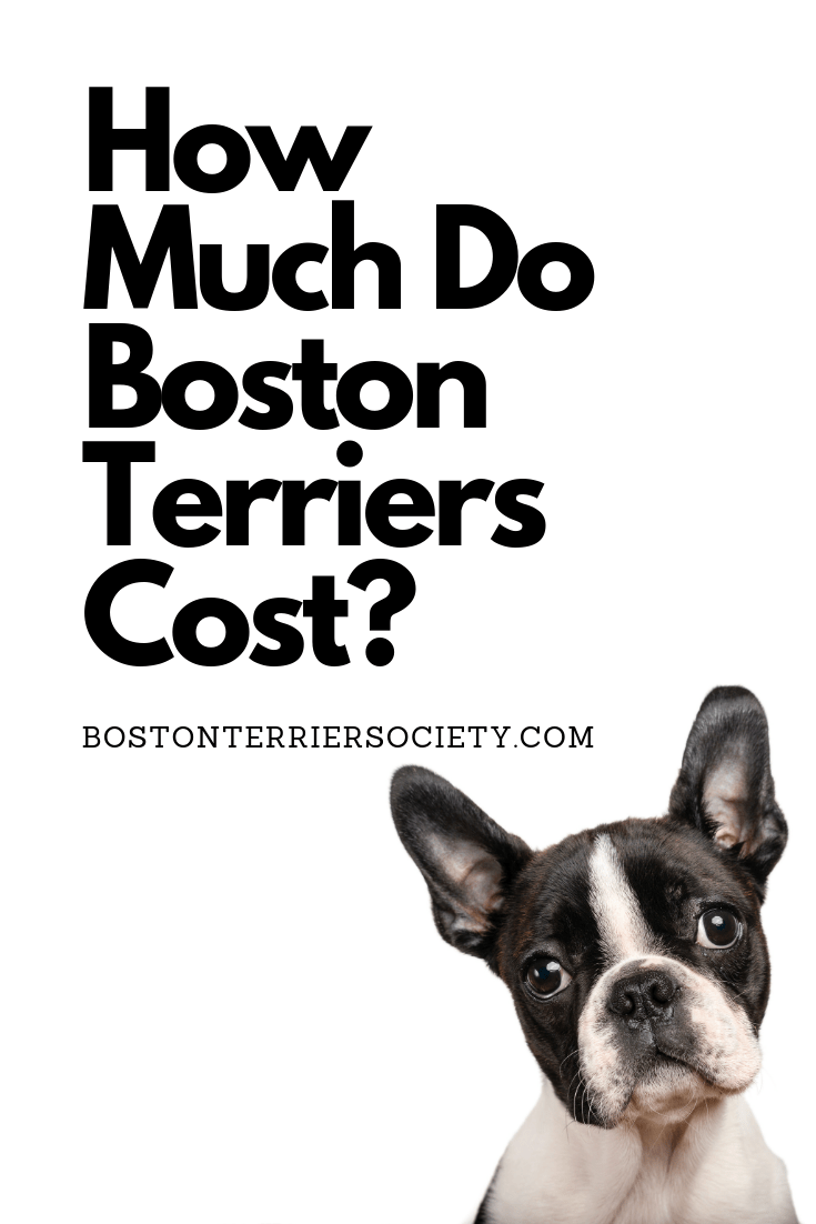 How Much Do Boston Terriers Cost Chart Where To Find Them Boston Terrier Society Boston Terrier Names Boston Terrier Puppy Boston Terrier