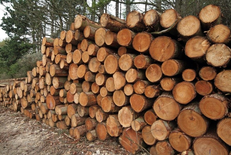 Hardwoods Shipped Directly To You Glehand Supplying The Highest Quality Hardwoods Including Quality Oak Birch A Hardwood Lumber Hardwood Suppliers Wood Logs