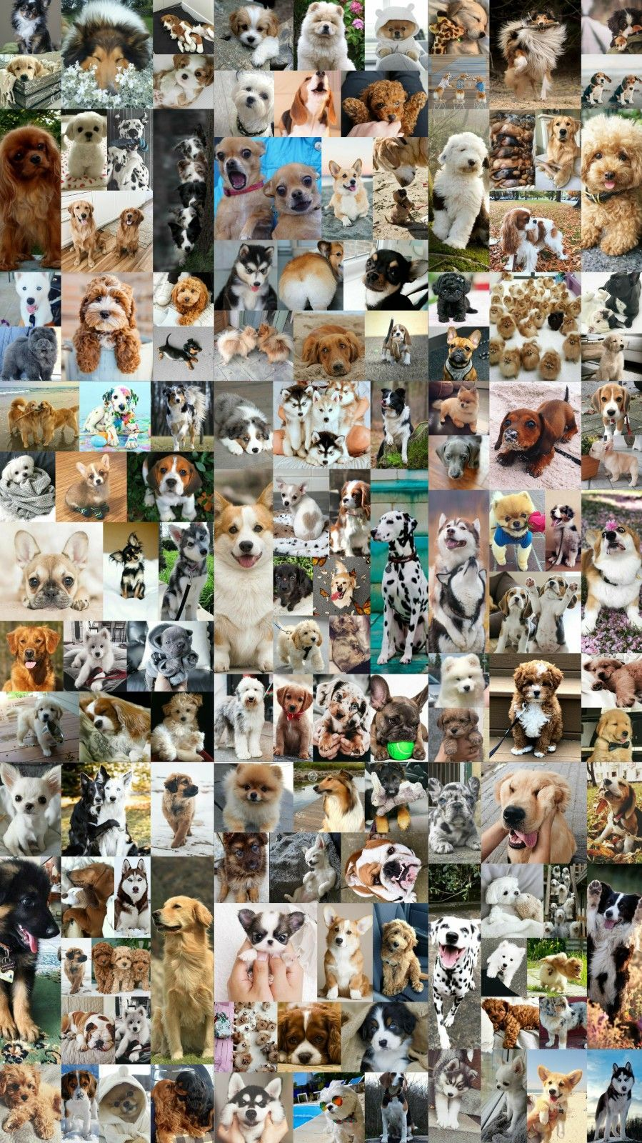 Wallpaper Background Collage Aesthetic Dogs Pets Puppy Dog