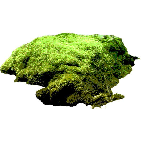 ZaSlike.com - Besplatni upload slika! » Untitled7jkza.png ❤ liked on Polyvore featuring greenery