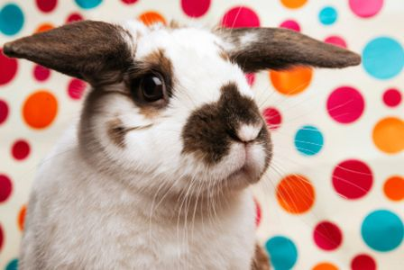 25 Bunny facts to share with your kids on Easter