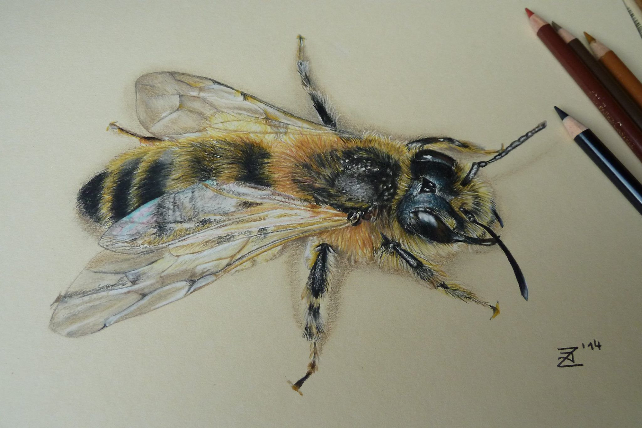 Wonderful Colored Pencil Drawing Bee Drawing Insect Art Color Pencil Drawing