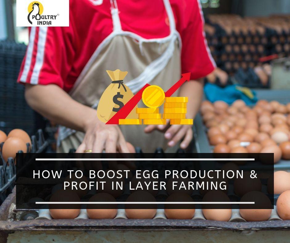 PoultryIndia poultryfarm eggproduction layerfarm