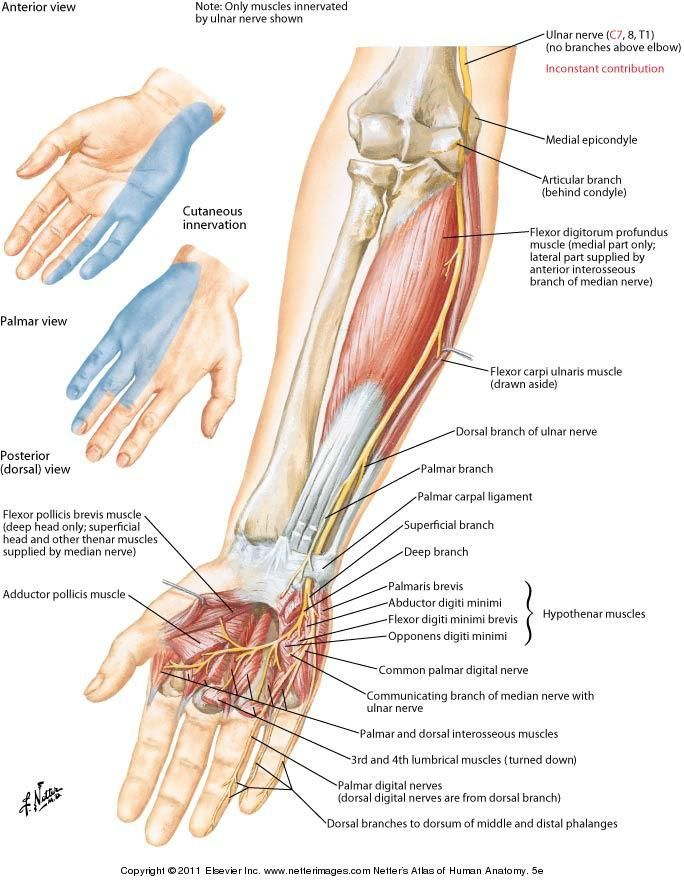 Denard Robinsons Injury Ulnar Nerve Hand Injuries And Knowledge