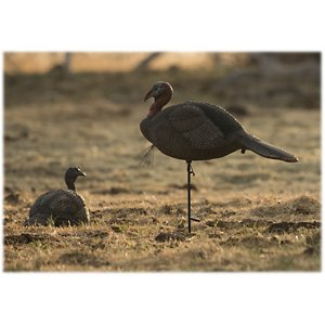 Lucky Duck Lucky HD Collapsible Jake Turkey Decoy