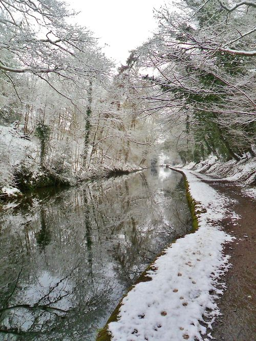Snow covered trees reflected in the Shropshire Union Canal, Brewood, Staffordshire, England