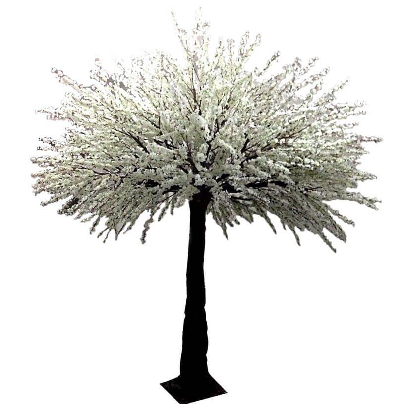 White Cherry Blossom Tree Hire Cherry Blossom Tree White Cherry Blossom Blossom