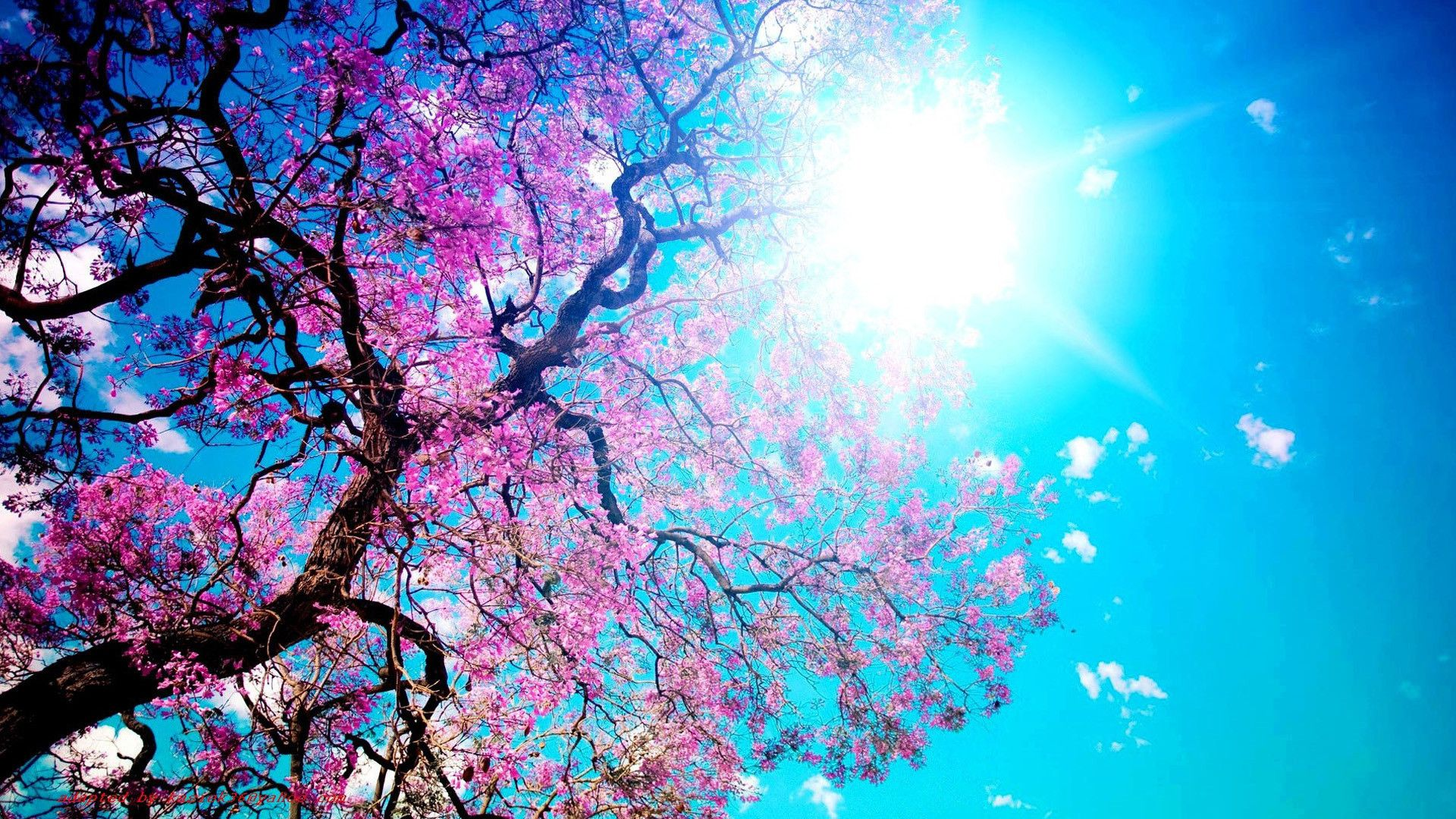 Wallpapers For Computer Spring Wallpaper Beautiful Nature Spring Spring Pictures