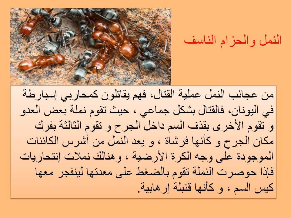 Pin By Islam And The Life On سنريهم آياتنا في الافاق Leo