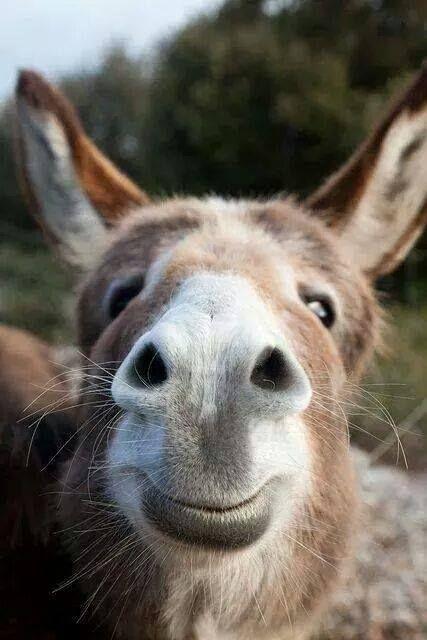 love donkey muzzles