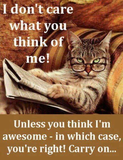 I Dont Care What You Think About Me Funny Quotes Memes Quote Cat Meme Lol Funny Quote Funny Quotes Humor Cat Reading Cute Animals Funny Cat Pictures