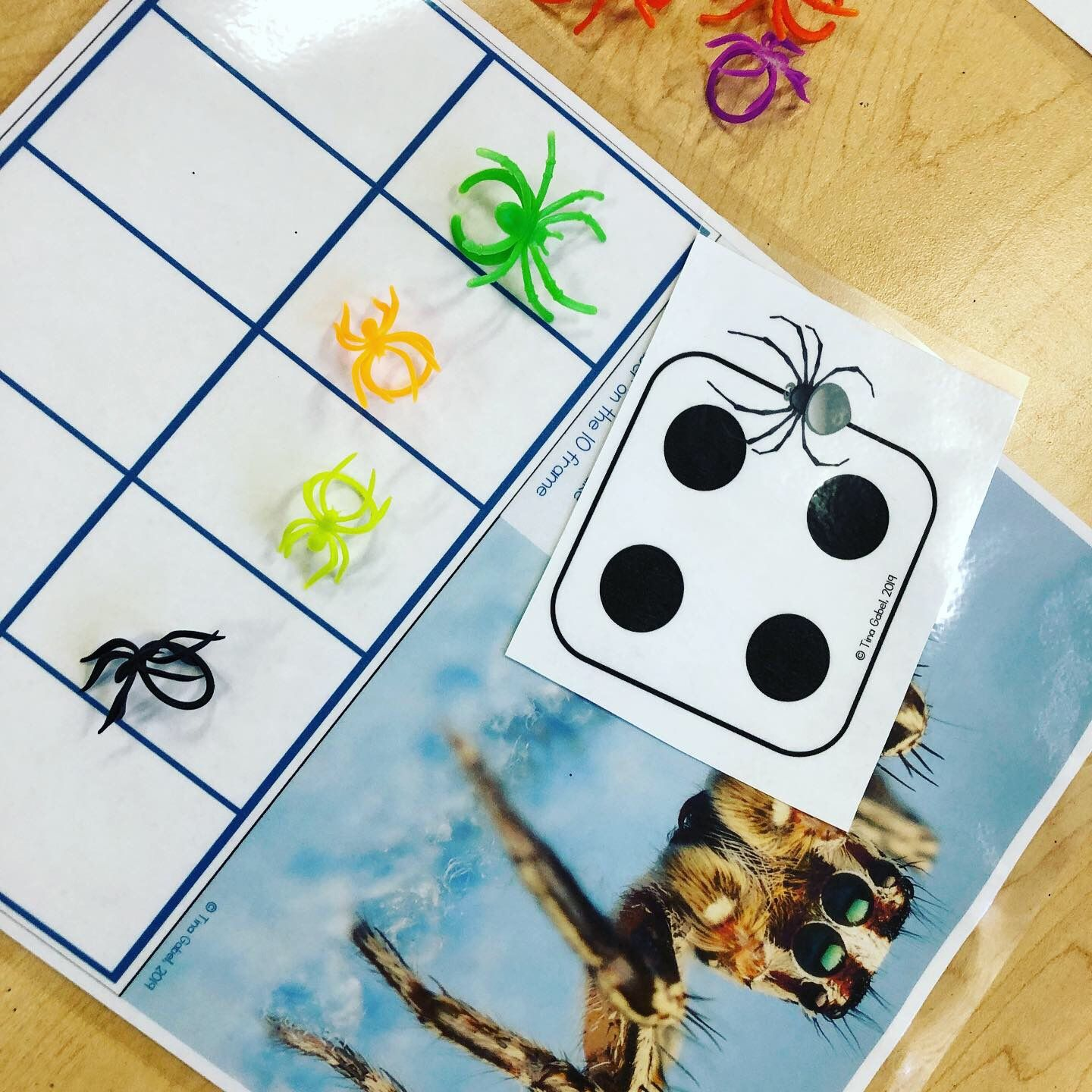 Spider Life Cycle Math Literacy And Science