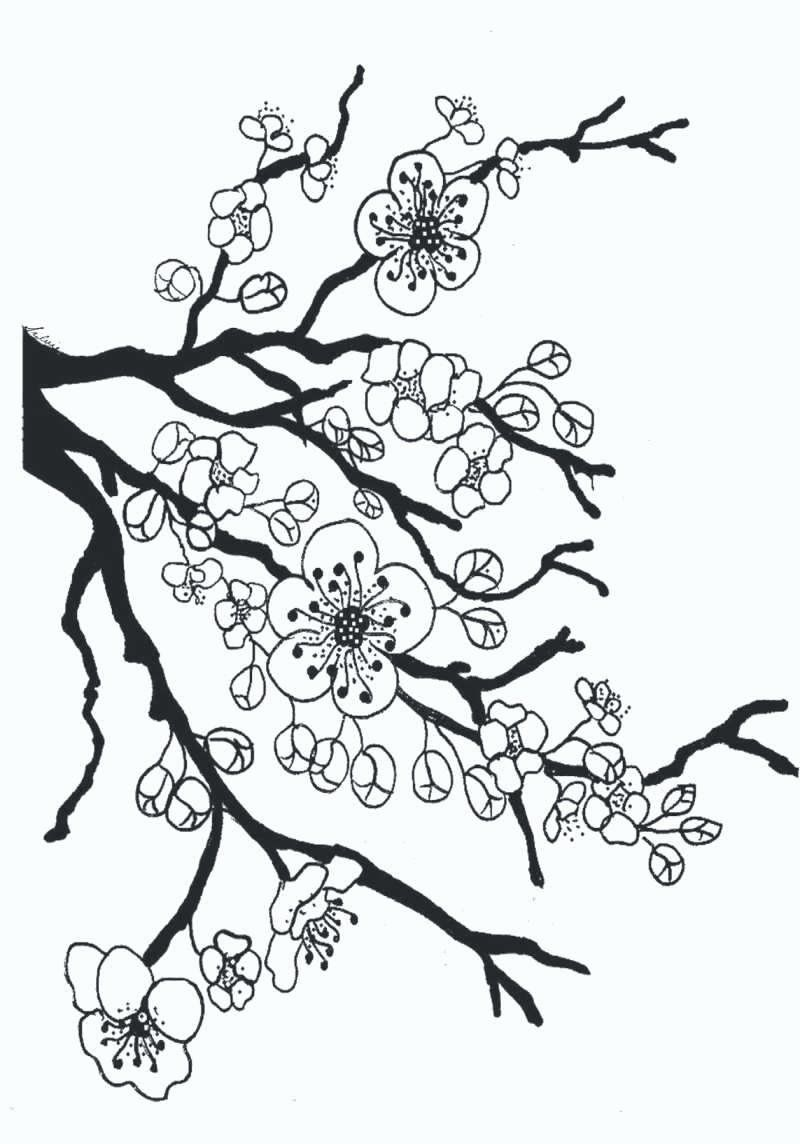 Tree Without Leaves Coloring Page Flower Coloring Pages Tree