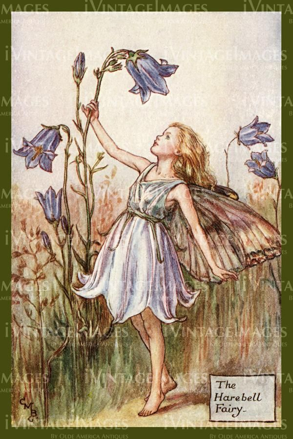 Cicely Barker 1923 - 7 - The Harebell Fairy -   24 fairy garden drawing ideas