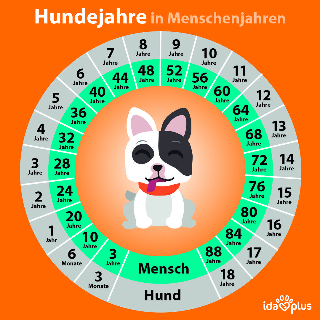 Hundejahre und Menschenjahre im Vergleich. Mit dieser