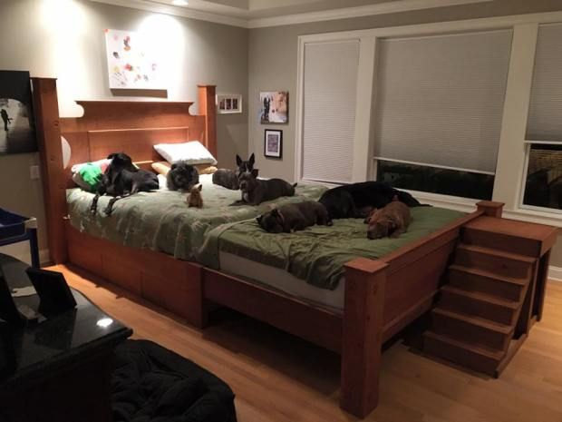 This Couple Built A Giant Mega Bed So They Could Sleep With Their 8 Rescue Dogs Dog Bed Tall Dog Bed Raised Dog Beds