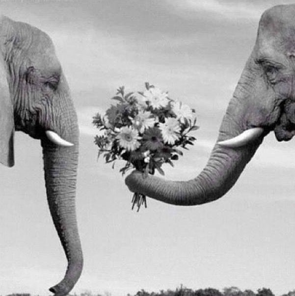 Elephant Giving Another Flowers How Adorable