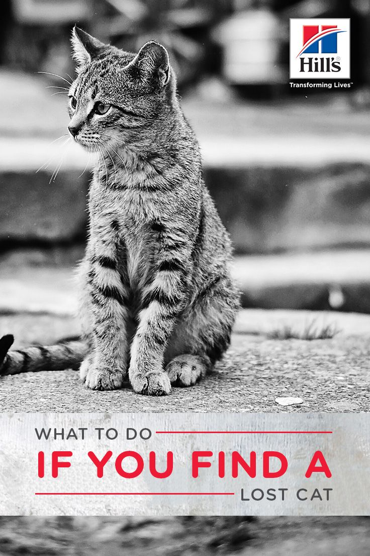 What Should I Do if I Find a Lost Cat? Cat behavior