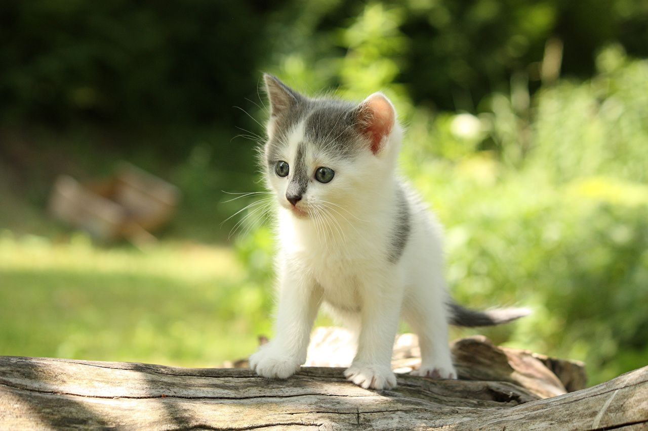 Wallpapers Kittens Cats Animals Staring Kitty Cat Glance Cute