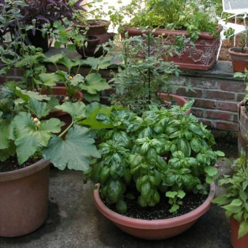Small Vegetable Garden Design ** Read more at the image link (This