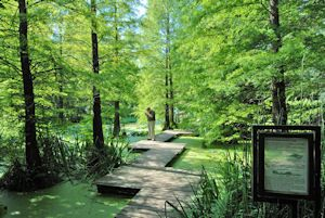 Lovely Botanischer Garten Bochum