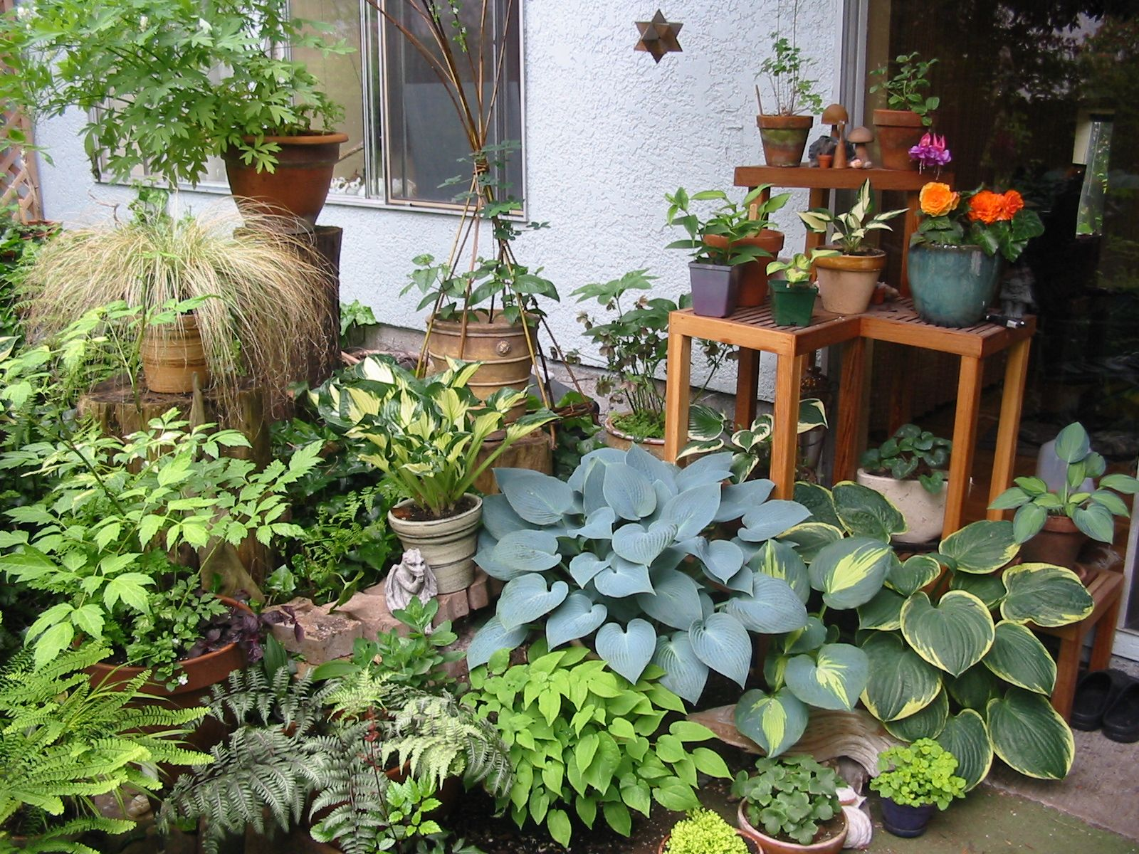 Patio for Gardening of Tropical Plants | Gardens in Small Spaces ...