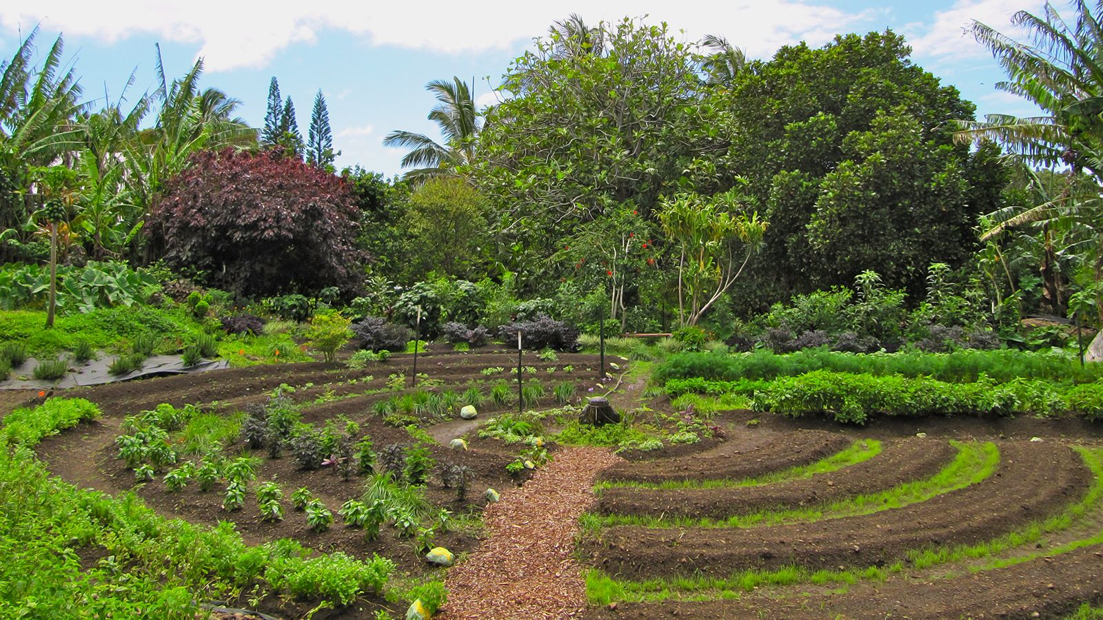 6 livres sur la permaculture t l charger gratuitement for Small permaculture garden designs